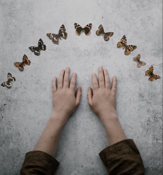 Adobe Spark | Butterflies